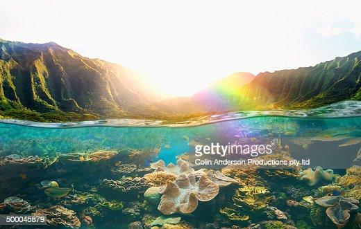 Tropical reef under rural cliffs