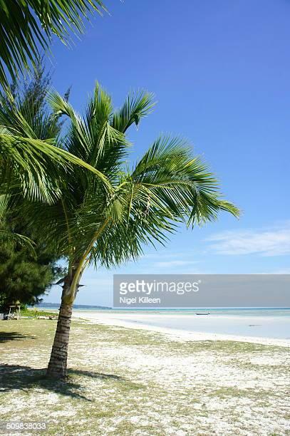 Tropical sandy beach and palm tree
