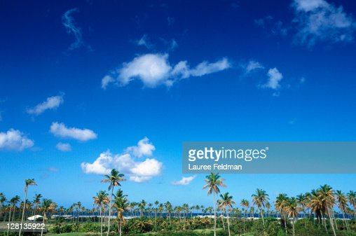 Tropical scene w/palm trees, Nevis, West Indies
