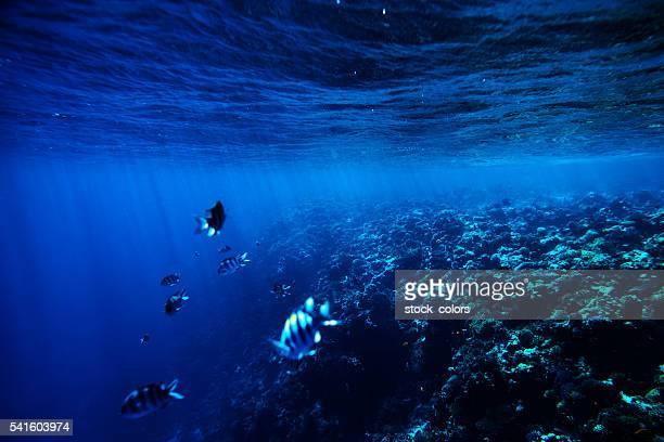 熱帯の海を背景に