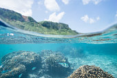 Tropical snorkeling in clear coral lagoon, Japan