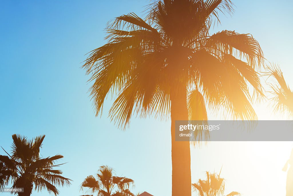 Tropical sunset : Stock Photo
