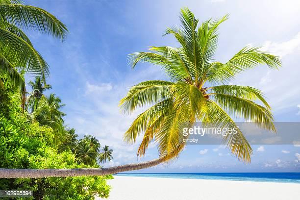 Tropical Sunshine Island