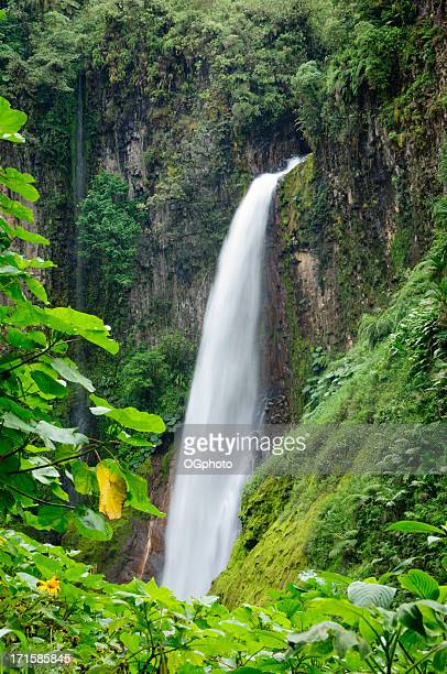 Tropical waterfall framed by lush foliage