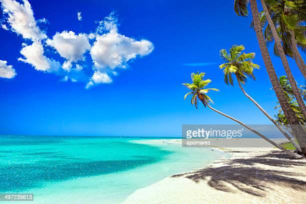 Praia de areia branca Tropical na ilha das Caraíbas com árvores de Coco