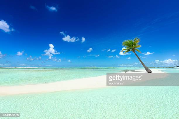 Tropical white sand cay beach with lonely coconut palm tree