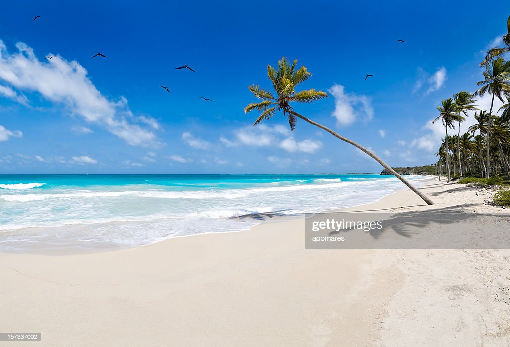 Tropical white sand virgin beach - Huge Image : Stock Photo