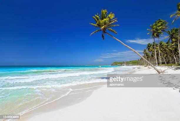 virgin Tropical playa de arena blanca