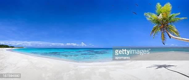 Tropicale plage de sable blanc vierge