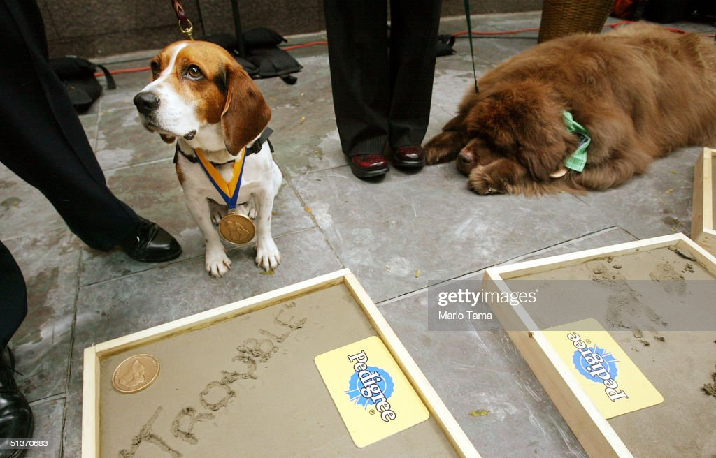 Americans Salute Their Favorite Hero Dogs At Canine World Heroes - Us customs miami map