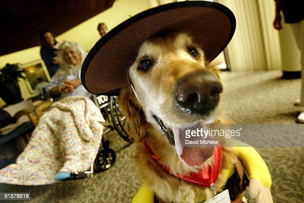 Trouper Hope a Pet Assisted Therapy dog wears a trooper Halloween costume as he visits with hospital patients including 58yearold Virginia Madrigal...