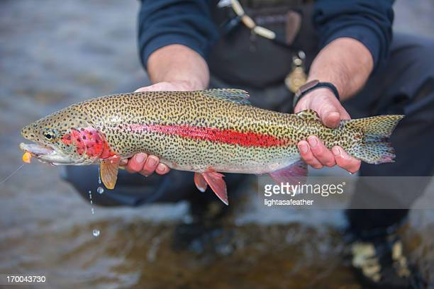 Trout Caught Flyfishing in Alaska