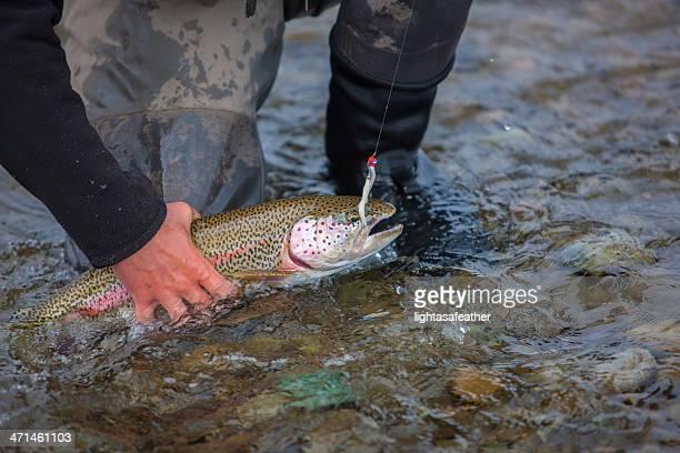 Trout Caught Flyfishing in Alaska