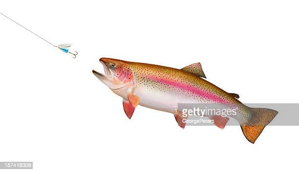 Trout Chasing Lure