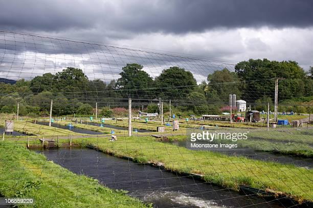 Trout farm in the Trossachs, Scotland