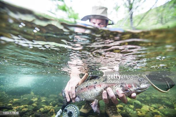 Trout fish underwater