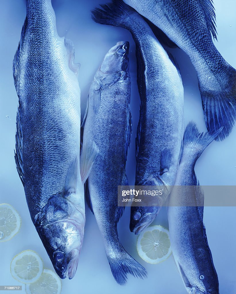 Trout fish with lemon slices : Stock Photo