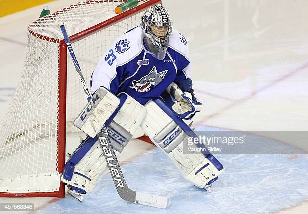 Troy Timpano of the Sudbury Wolves in goal during an OHL game between the Sudbury Wolves and the Niagara Ice Dogs at the Meridian Centre on October...