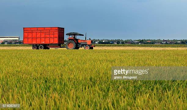 Truck at Paddy Field