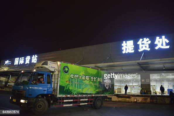 A truck carrying Americaborn giant panda Bao Bao stops at Chengdu Shuangliu International Airport on February 22 2017 in Chengdu Sichuan Province of...