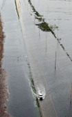 A truck drives through Hurricane Isaac's flood waters on August 31 2012 in Plaquemines Parish Louisiana Much of Plaquemines remains flooded as...