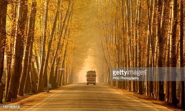Truck in golden tunnel