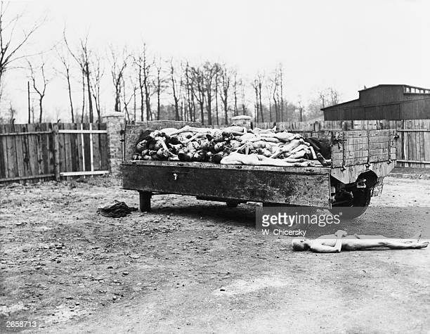 A truck load of bodies at the German concentration camp at Buchenwald found by troops of the 3rd US Army on liberating the camp The bodies were to be...