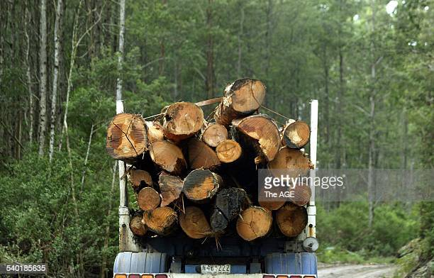 A truck loaded with Mountain Ash from the Toolangi State Forest leaves one of the coupes designated for harvesting by the Central Forest Management...