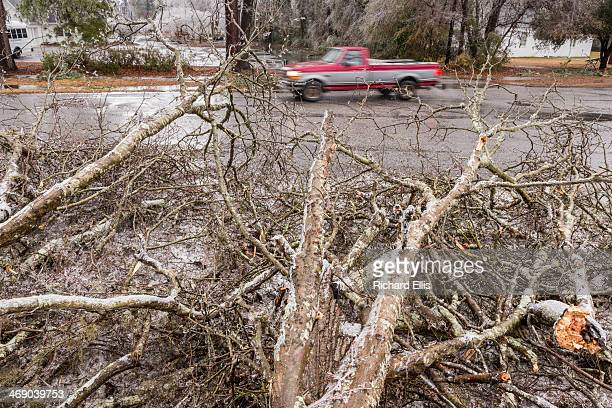 A truck passes a downed tree blocking part of a road after a rare winter ice storm swept across the South February 12 2014 in Summerville South...