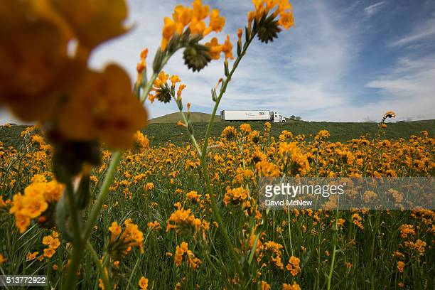 A truck passes wildflowers along California State Route 58 on March 4 2016 west of Tehachapi California Despite hopes that the major El Nino effect...