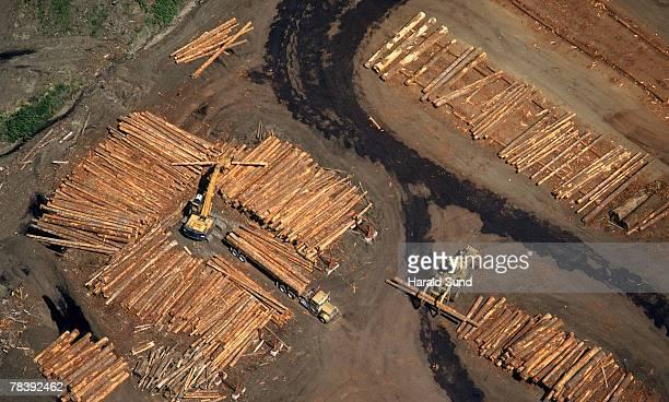 Truck sorting logs