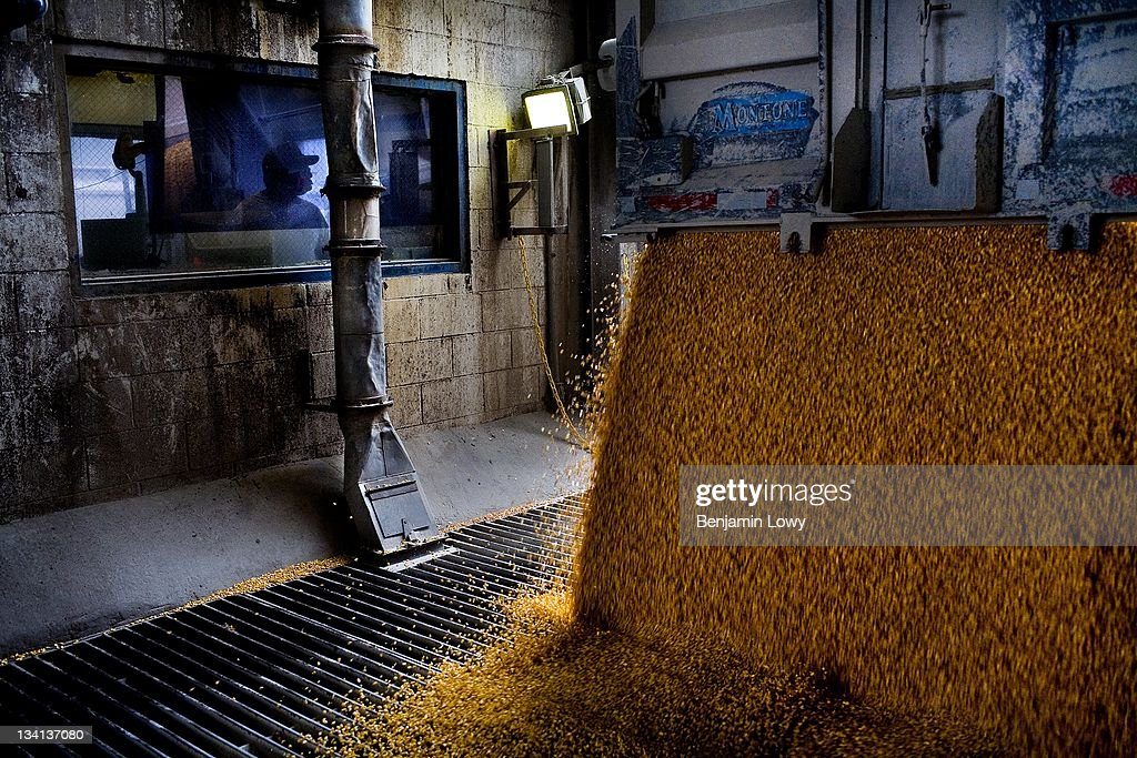 Truckers deliver corn to waiting grain elevators at Archer Daniel Midland's Ethanol and Corn Syrup production plant on August 30 2006 in Decator...