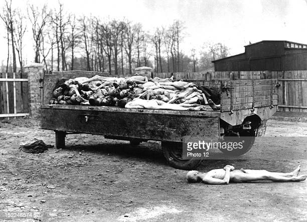 A truckload of bodies of prisoners in Buchenwald concentration camp after its liberation April 13 1945