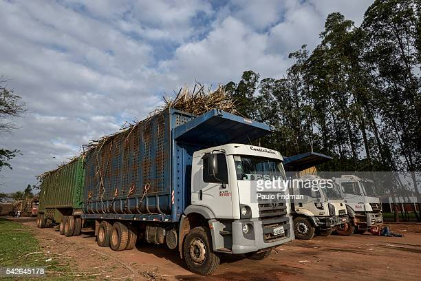 Trucks with Sugarcane plants wait in line to enter the mill At Unidade industrial Cruz Alta da Guarani SA ethanol sugar and energy about 40 km from...