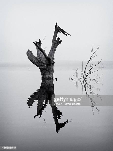 Trunk of a big dead tree in the water