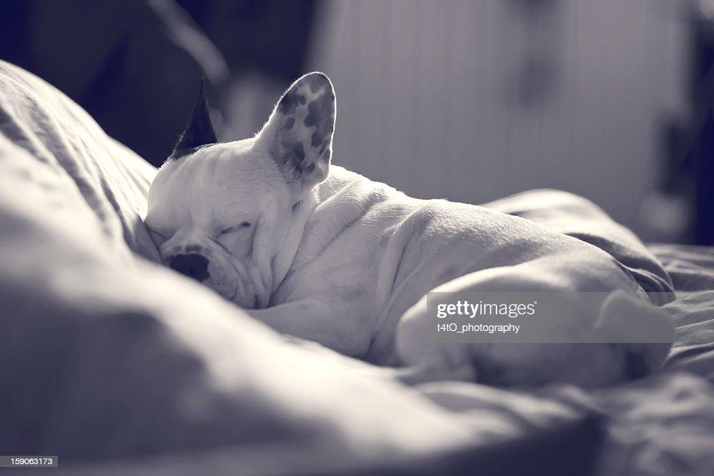 Trying to sleep : Stock Photo