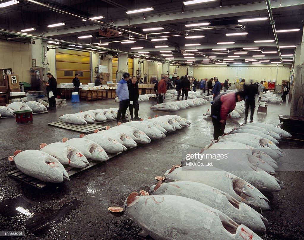 Tsukiji Fish Market, Chuo, Tokyo, Japan