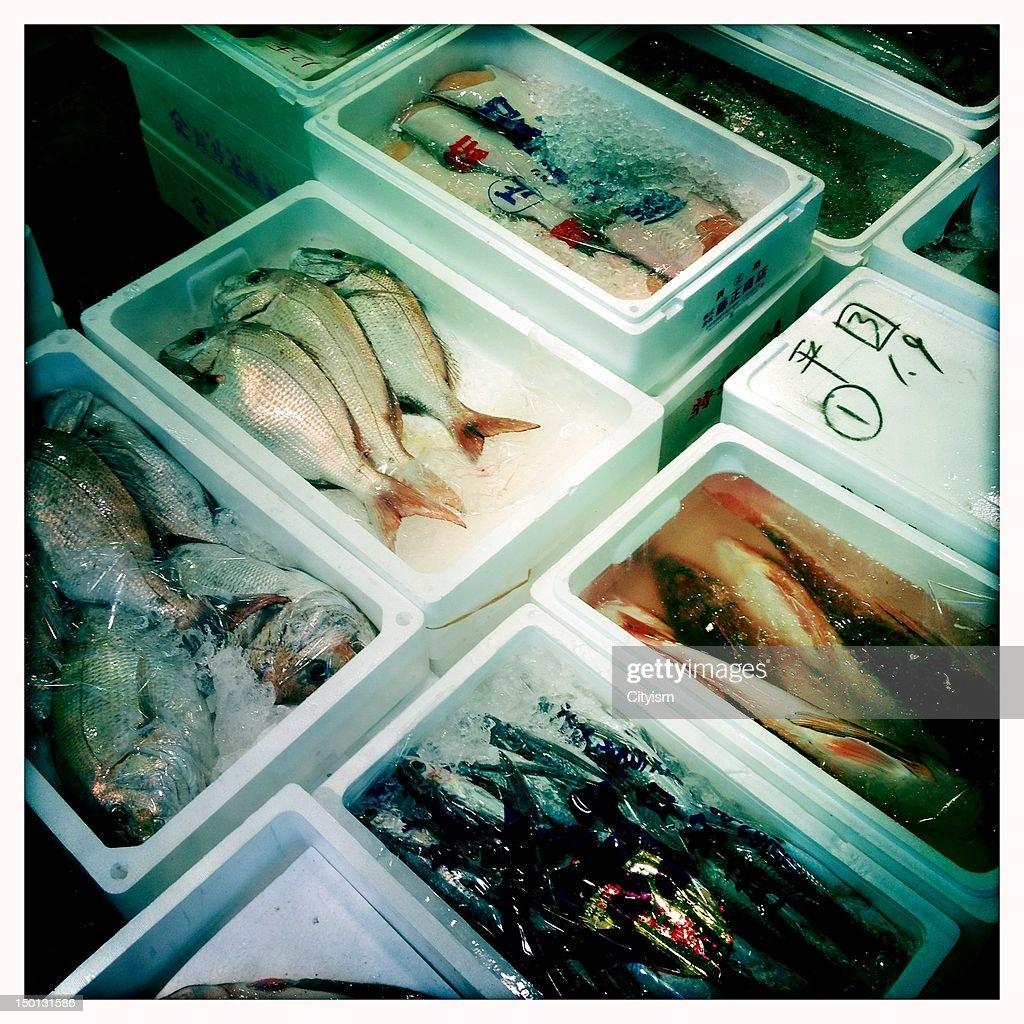 Tsukiji fish market : Stock Photo