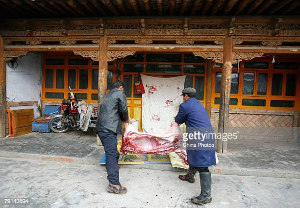 Tu ethnic villagers move the carcus of a slaughtered pig at the Wushi Village on January 21 2008 in Huzhu County of Qinghai Province China In...