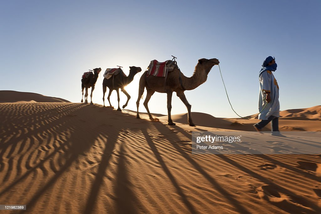 Tuareg Man with Camel Train, Sahara Desert, Morocc