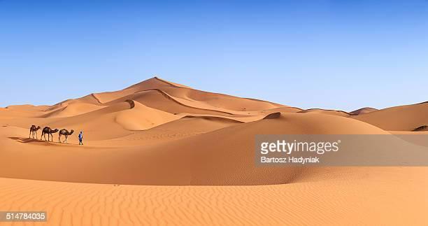Tuareg with camels on Western Sahara Desert