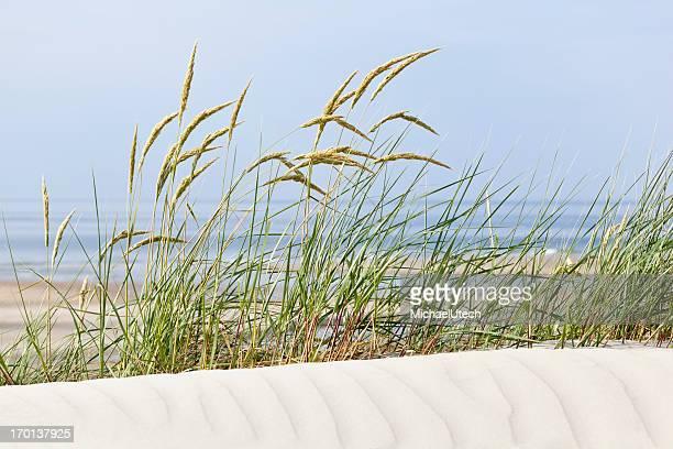 Tuft von Gras im Strand-Dünen