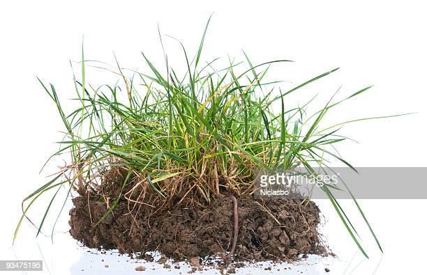 Tuft de hierba con tornillo sin fin