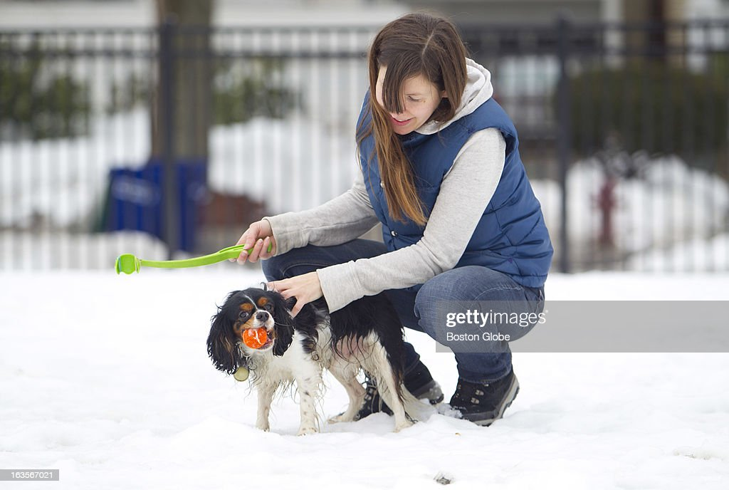 Tufts University Campus - Ellis Oval - Jamie White of Somerville, squeezed in a quick game of fetch with her four-year-old Cavalier King Charles Spaniel, Oliver, before going to class at Boston Architectural College where she is getting her Master's degree.