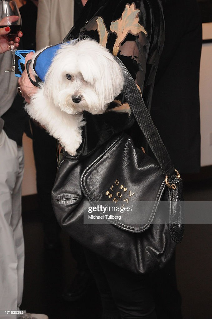 Tulea, dog belonging to actress Jane Fonda with a detail of Fonda's Bulgari handbag at an exhibition of photographer Pattie Boyd's photographs entitled 'Pattie Boyd: Newly Discovered' at Morrison Hotel Gallery on June 28, 2013 in West Hollywood, California.