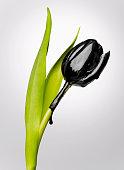 Tulpe mit schwarzen motor-Öl, Nahaufnahme