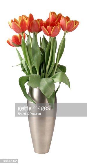 Tulip floral arrangement : Stock Photo