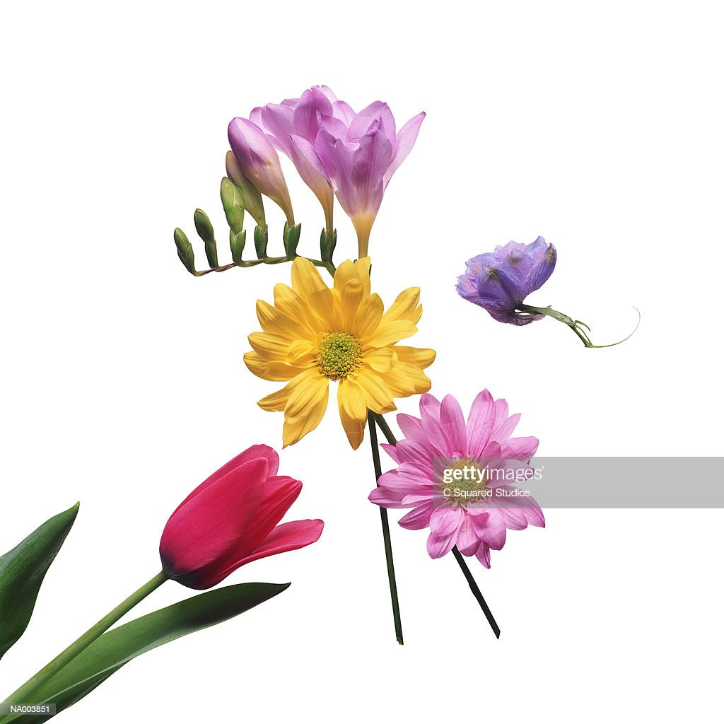 Tulip, Freesia, Chrysanthemum, Snapdragon : Stock Photo