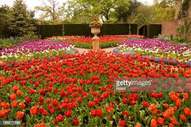 Tulpe-Garten