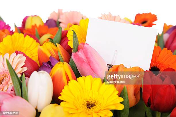 Tulips and daisies with white card